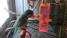 Birdy Plunk Foraging Toy small