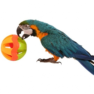 Parrot Ball toy Large